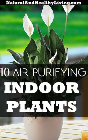 Top 10 Air Purifying Indoor House Plants - Natural and Healthy Living