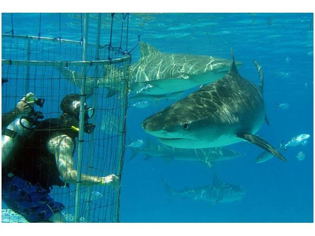 Swim with sharks. Without getting eaten!