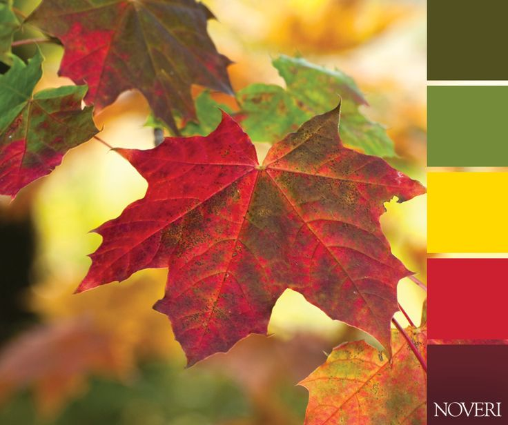 Welcome autumn! 🍁  #autumn #lieves #colors #green #yellow #red #purple #nature