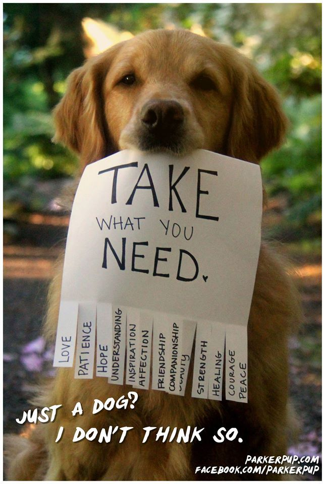 144 best Tear off TAG SIGN images on Pinterest Campaign posters - lost dog flyer template word