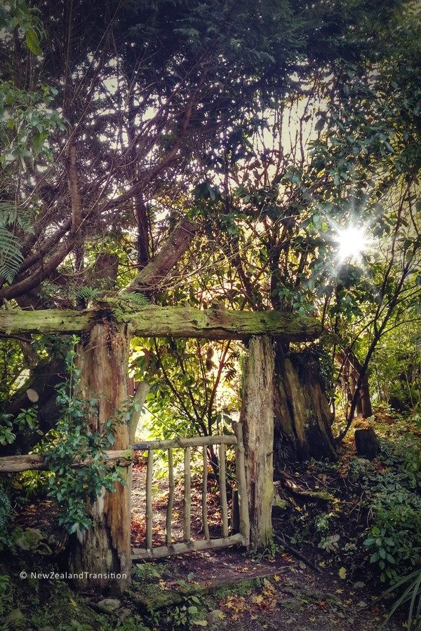 rustic gateway in the forest