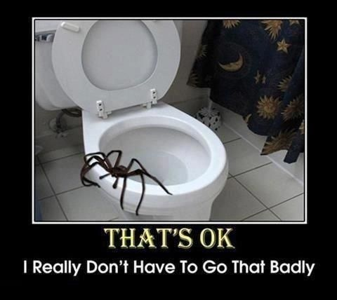 But generally they're just annoyingly scary. | 19 Reasons Why Arachnophobes Should Give Australia A Miss