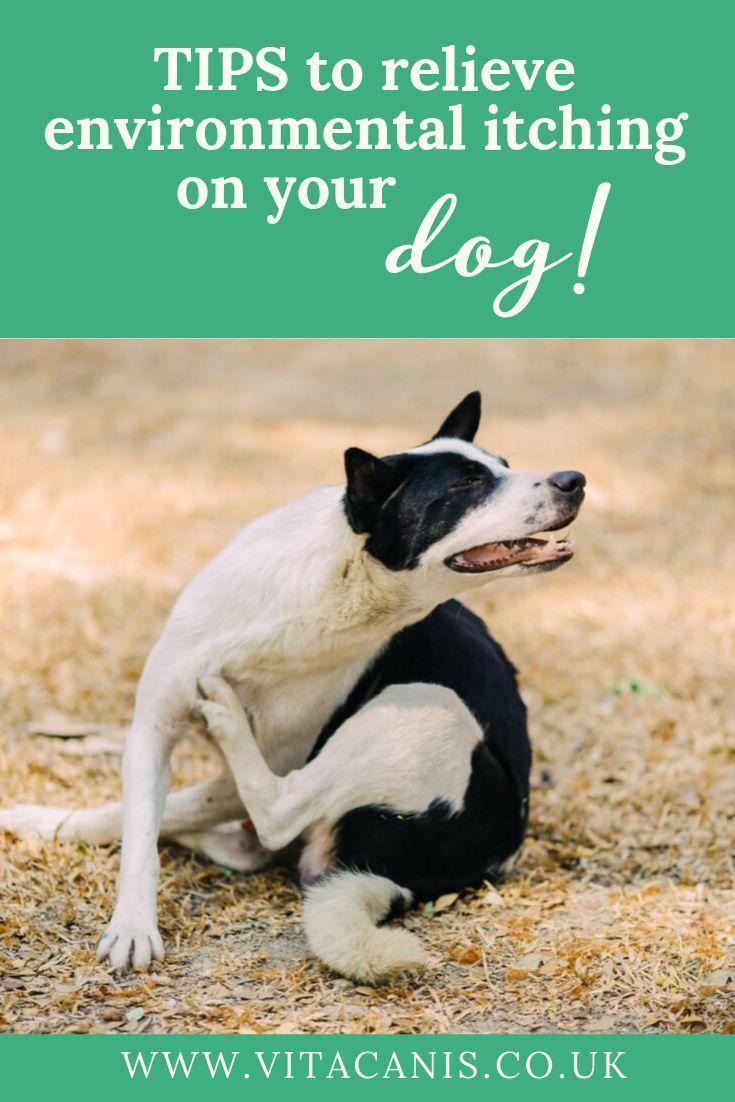 Goodbye Itch Vita Canis In 2020 Dog Skin Care Itchy Dog Skin Dog Dry Skin