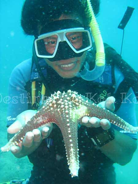 Learn about underwater life with Paradise Divers @ Koh Kood (Thailand)