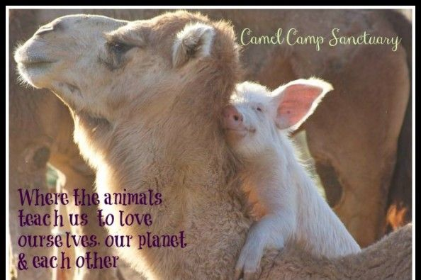 Camel Camp Sanctuary Vehicle on GoFundMe - $90 raised by 3 people in 1 hour.