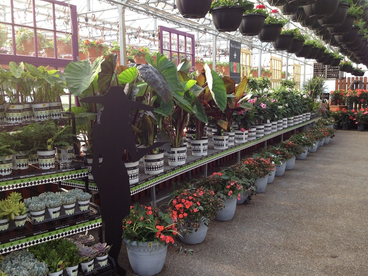 Foertmeyer Sons Greenhouse Delaware Ohio Hc Retailers Pinterest Ohio Delaware And Sons