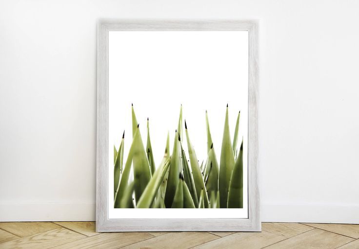 Happy Aloe Vertical Color Photograph - Southern California Modern Fine Art Print - Original Cactus Southwestern Desert Picture by ShopRachaels on Etsy https://www.etsy.com/listing/556819039/happy-aloe-vertical-color-photograph