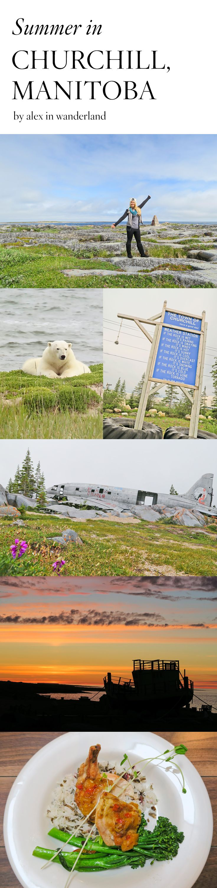 Belugas, bears and blooms. Summer in Churchill, Manitoba.