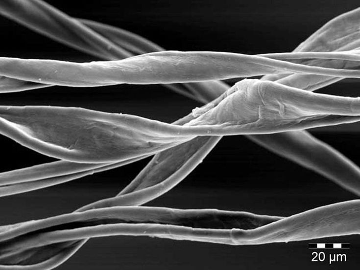 Description: cotton fibres
