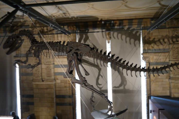 T-Rex Skeleton, Natural History Museum, London