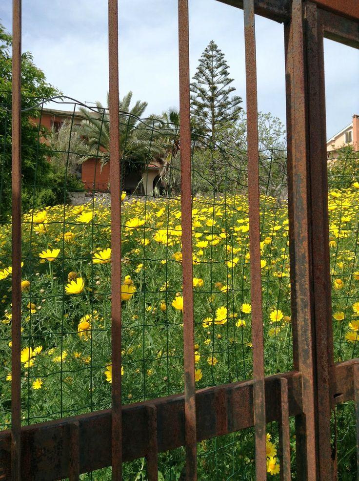 Rusted gate of a forgotten garden.  #Sardinia #Suburbs #Wildlife