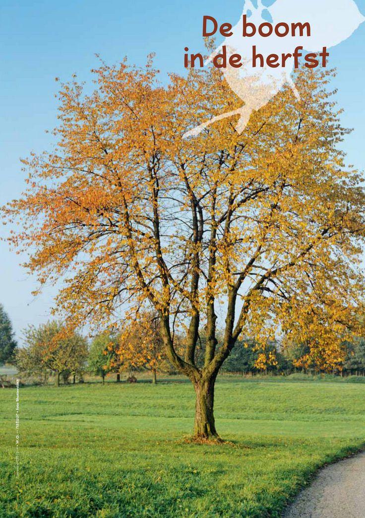 De boom in de herfst @keireeen