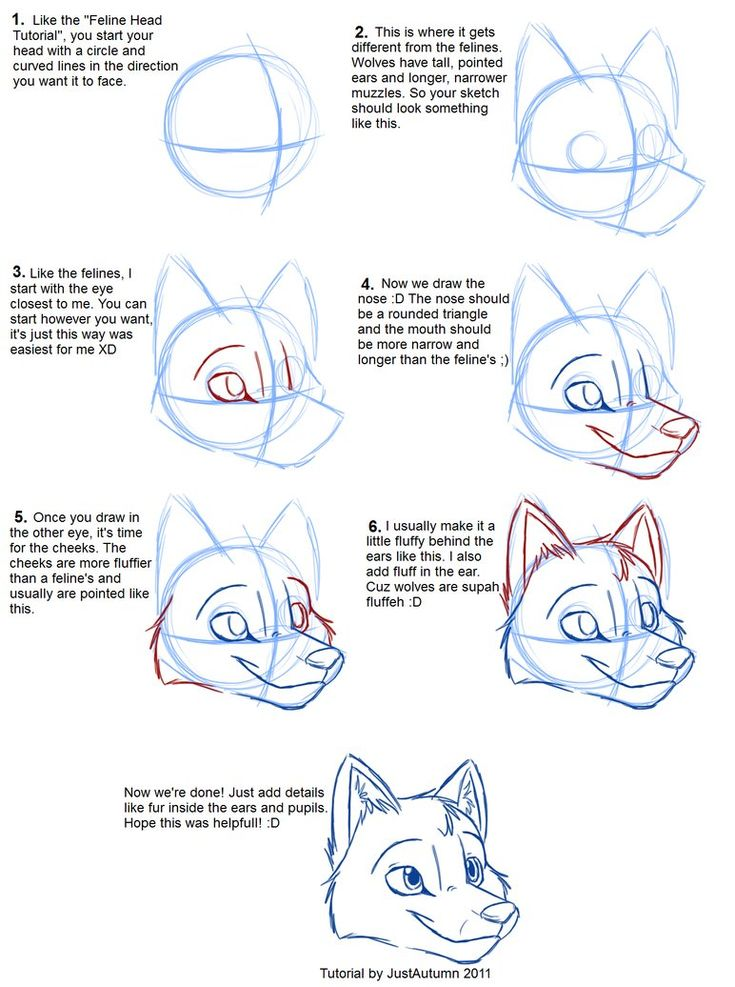 How to Draw Canines: Head by *JustAutumn on deviantART