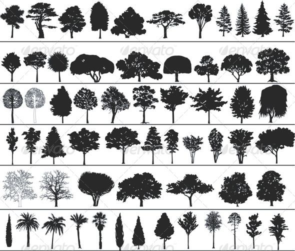 different trees. I like the pines and the bare oak for tattoos