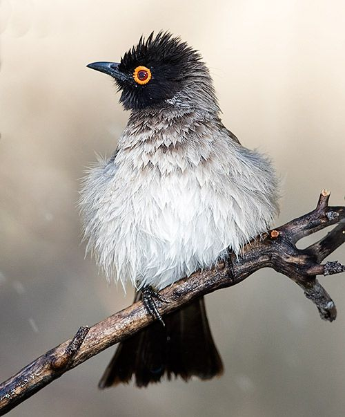 197 best images about Wild birds of South Africa on ...