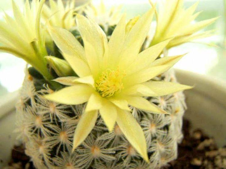 17 mejores im genes sobre jardiner a en pinterest - Informacion sobre los cactus ...