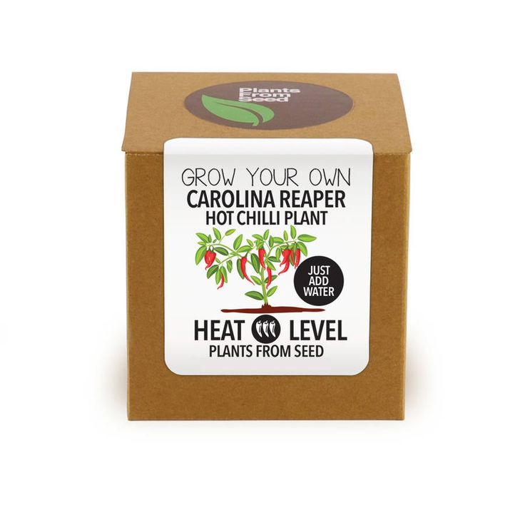 Grow The Worlds Hottest Chilli Plant (Carolina Reaper) Kit at home.  The Carolina Reaper is now the Guinness World Record Holder as the Worlds Hottest Chilli Pepper averaging 1.569 Million Scoville Units, and peaking at an incredible 2.2 Million Scovilles.  The Carolina Reaper looks good, tastes amazing and the heat will knock you over. It has a fruity sweet aroma and the taste is of chocolate and cherry.