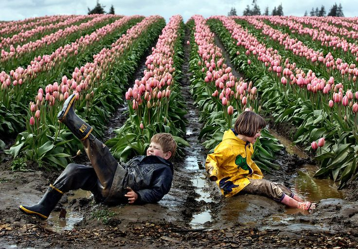 """Alex Fritch, 7, and his sister Ana, 8, of Snohomish, Wash. empty the water from their boots after splashing in the puddles near the Pink Impression tulips at Tulip Town during the Skagit Valley Tulip Festival Tuesday, April 8, 2008. """"The flowers are incidental. The mud and the puddles are far more interesting,"""" say their mother, who has brought the siblings there the past five years. The kids have come to enjoy playing in the puddles so much, that the family times its visits for after a…"""