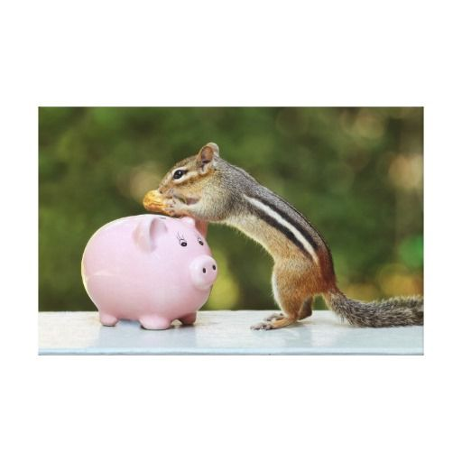 Cute Chipmunk with Funny Money Piggy Bank Picture Canvas Prints