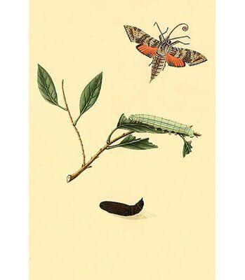 Buyenlarge Surinam Butterflies Moths And Caterpillars By Jan Sepp Graphic Art Size 36 H X 24 W X 1 5 D Graphic Art Print Moth Caterpillar Graphic Art