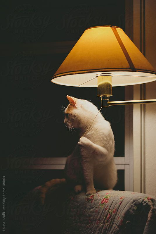 String Lights Tiger : Cat pulling the light string CATS & TIGERS Pinterest Cats, The o jays and Light string