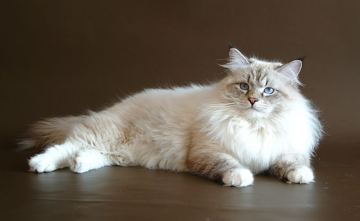"""Kittens for sale 