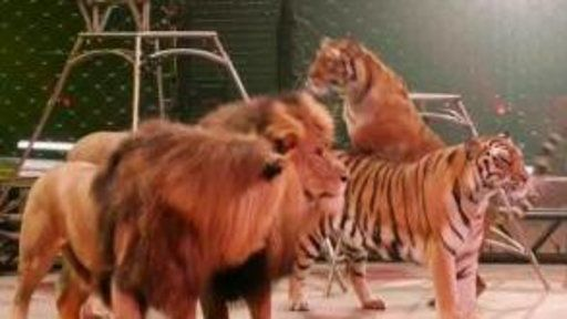 The End of Ringling Bros. and Barnum & Bailey Circus https://www.yahoo.com/news/end-ringling-bros-barnum-bailey-155703846.html?utm_campaign=crowdfire&utm_content=crowdfire&utm_medium=social&utm_source=pinterest