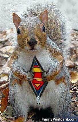 nananananana! super squirell! - squirrels Photo