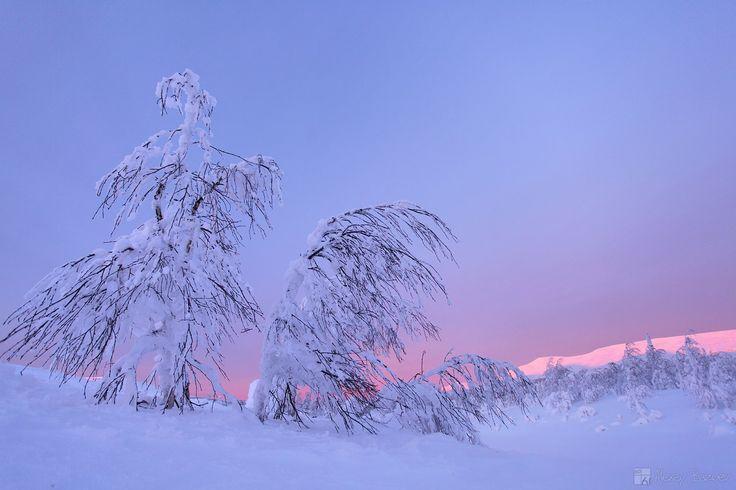 ГУХ. 8. 01. 2016. -35. фото:А.Базуев