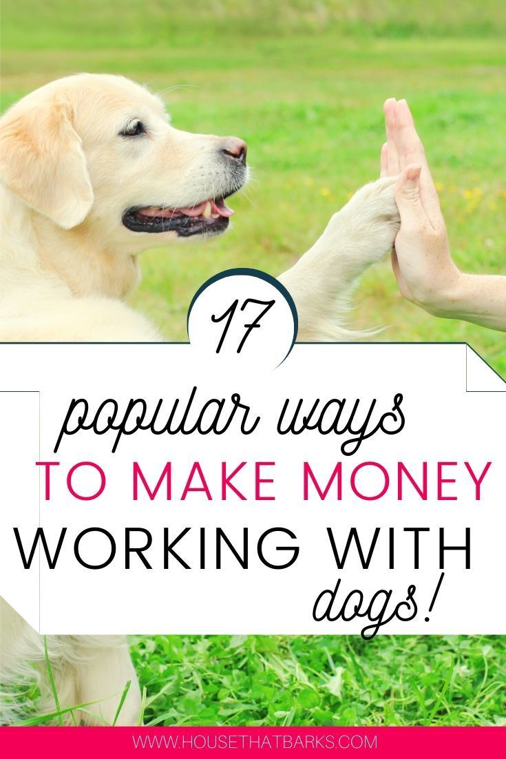 You Can Make Money Working With Dogs Dog Jobs Making Money With Dogs Training Your Puppy Training Your Dog Dogs