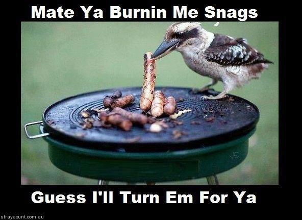 Kookaburra cookin sausages! #straya #strayacunt