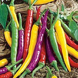 17 best images about growing chillies book on pinterest - Best romanian pepper cultivars ...