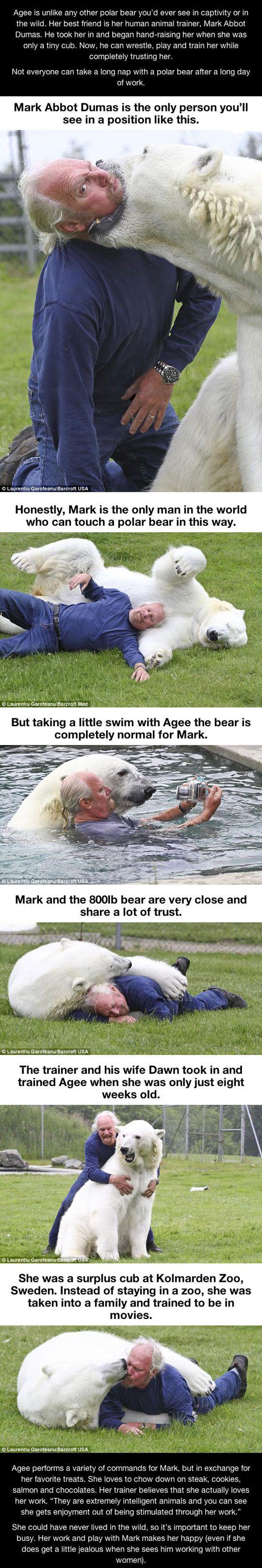 polar bear - WOOOW!