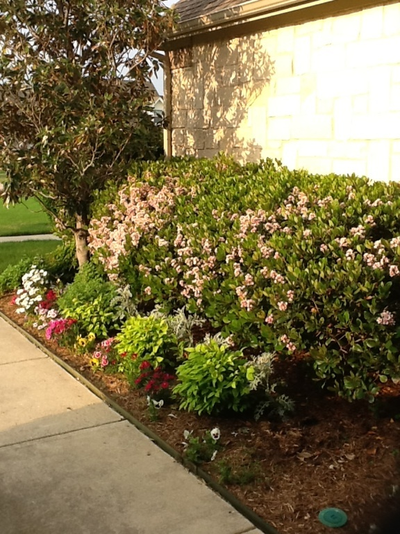 26 best images about flower beds on pinterest front for Best plants for front flower bed