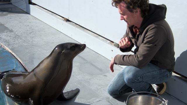 Ronan the Sea Lion Bobs Her Head to Music