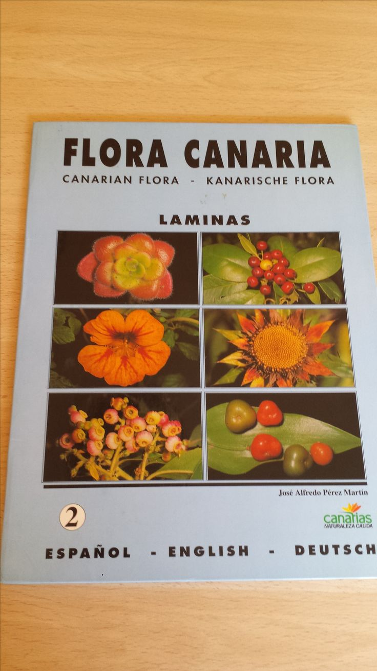 20 láminas de Flora Canaria. Canarian flora. Kanarischen Flora. Carpeta 2. Disponible en Ebay: http://www.ebay.es/itm/20-laminas-de-Flora-Canaria-Canarian-flora-Kanarischen-Flora-Carpeta-2-/122058721095?hash=item1c6b444747:g:XjoAAOSwR5dXQwb-