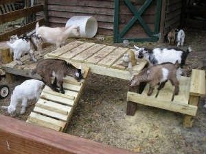 Pallet Goat Playground                                                       …