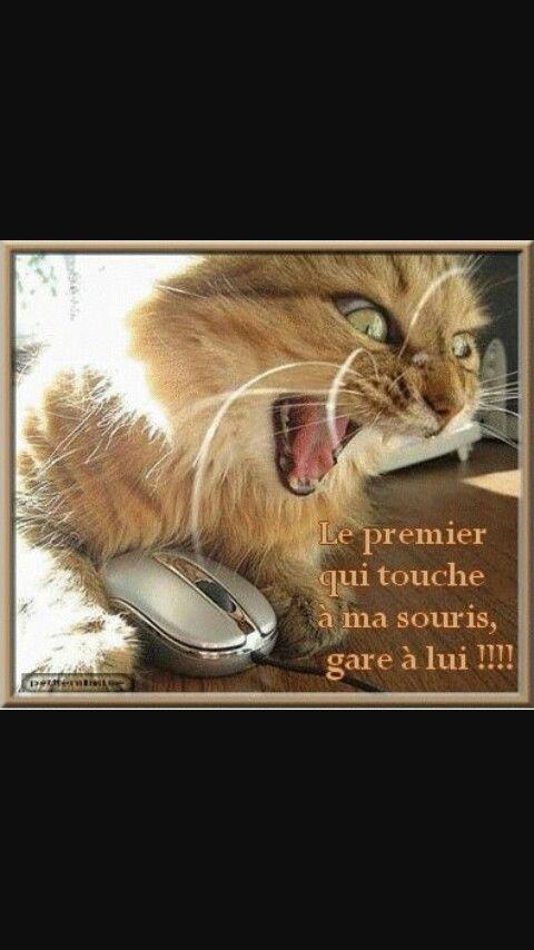 Le chat, et sa souris ?!