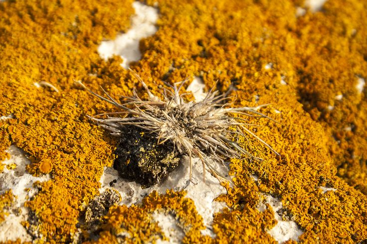 Orange moss by An Drada on 500px