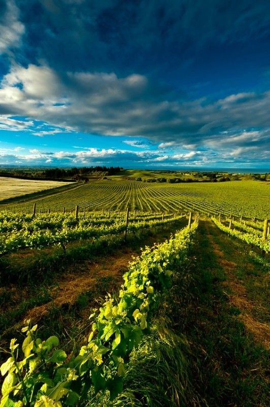 New Zealand is not really known for their wine, but if you visit Millar Road you will probably ask yourself how that's the case. A vineyard tour, or simply a glass of the local speciality, will open your tastebuds to the whole new world of New Zealand wine.