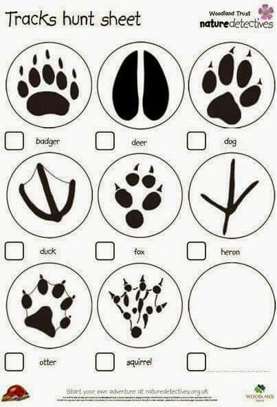 26 best Tracking...who's print is it? (Animal tracks and