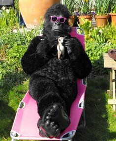 is her, the mad monkey knitter, in a gorilla suit. That she knitted ...
