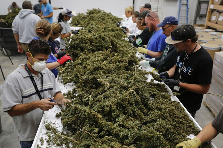 Text... (617)829-3512 www.chrismarijuanadispensary.com Top marijuana strains sale for like White Widow,sour Diesel,Hindu Kush,afghani kush,Super Silver Haze,OG Kush,Lemon haze,granddaddy purple,AK 47,Blueberry kush, Strawberry kush,bluedream,Moonrocks,shatter,wax