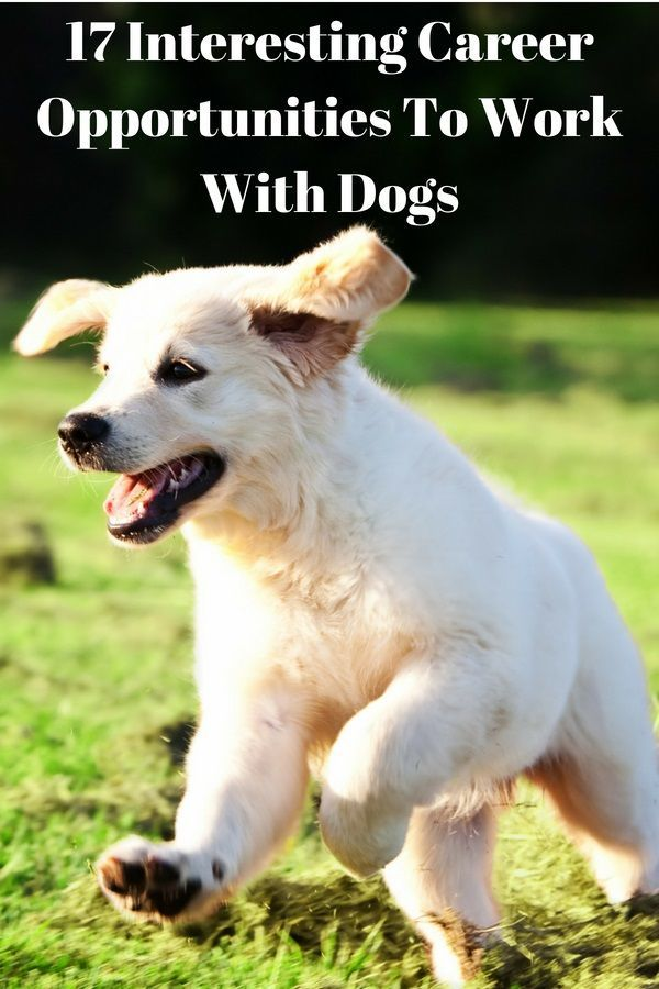 17 Interesting Career Opportunities To Work With Dogs It S A
