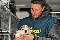 Animali, Forestale scopre traffico illecito di cuccioli di chihuahua