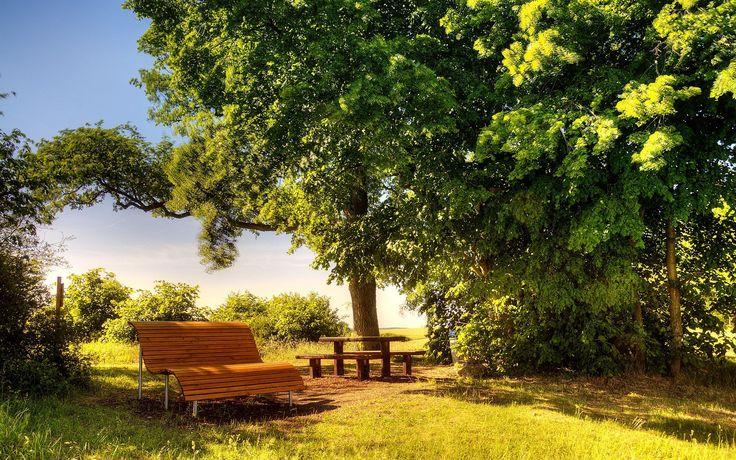 7022555-sunny-day-bench.jpg (2560×1600)