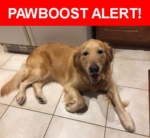 Is this your lost pet? Found in San Antonio, TX 78250. Please spread the word so we can find the owner!  Female Golden Retriever found on Wednesday, 5/24/2017, near Zachry Middle School, Culebra & Cliffbrier in San Antonio. She has a collar with name and phone #. Callers must verify correct information and provide satisfactory proof of ownership or Vet records to claim.  Cliffbrier Dr. and Timber Path, San Antonio, TX