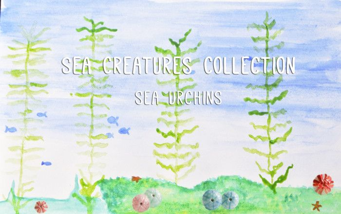 Sea urchins in kelp forests :)