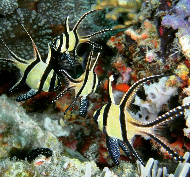Beauty of marine life. Bunaken National Marine Park Grand Luley Resort Manado www.luleyhotels.com
