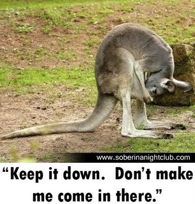 48 best images about kangaroos on Pinterest | Mothers ...